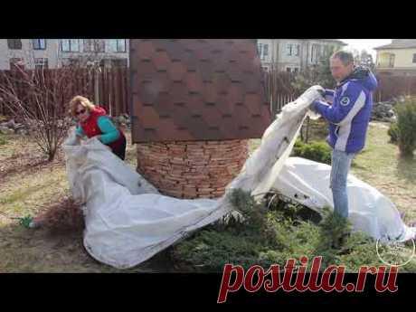 Раскрытие роз весной. Часть 1 - YouTube