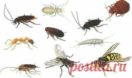 HOW to STRUGGLE WITH HOUSEHOLD INSECTS? — Kopilochka of useful tips