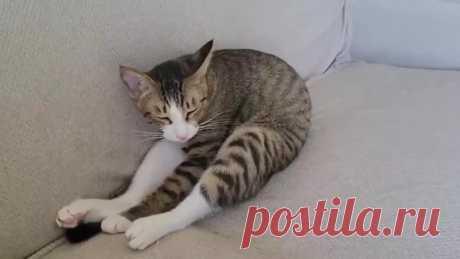 Только кошки умеют так свернуться в крендель!))