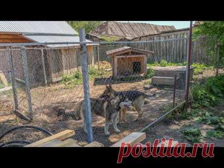 Вольер для двух собак, в котором не скучно