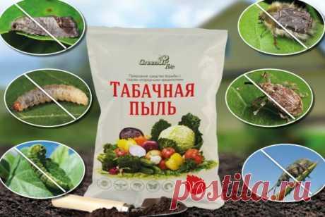 Как использовать табачную пыль в саду и огороде: Табачная пыль от насекомых вредителей и как удобрение для растений: