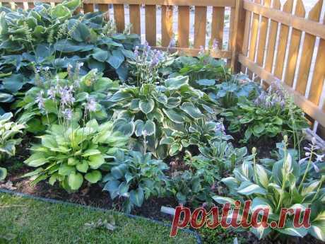 14 удивительно красивых растений, которые стоит посадить в саду | В цветнике (Огород.ru)