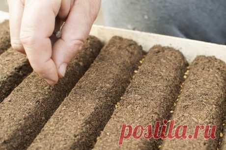 Когда высевать семена на рассаду – вычисляем оптимальные сроки | Рассада (Огород.ru)