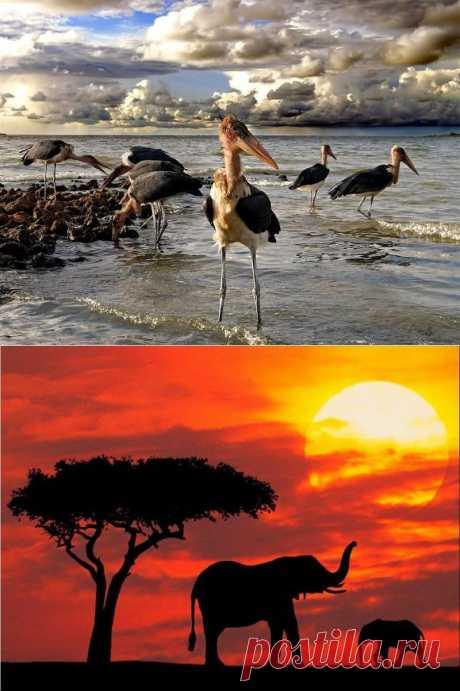 4 причины для того, чтобы посетить озеро Виктория в Африке | VeniVidi.ru