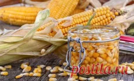 La conservación del maíz en las condiciones de casa