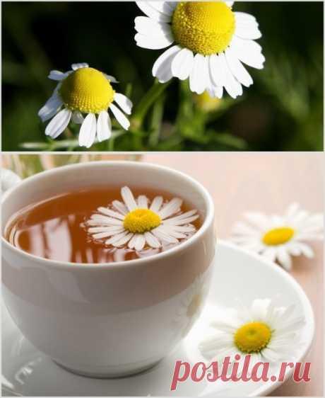 Меняем листовой чай на ромашковый! Еще наши бабушки употребляли ромашку для улучшения пищеварения. Пожалуй, история применения этого растения насчитывает тысячи лет. Ромашковый чай мало того что очень недорогой, так еще и имеет отличные вкусовые качества. Особенно приятен с медом.