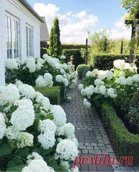Безупречный сад с гортензиями