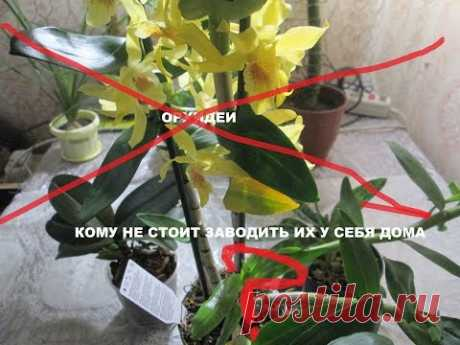 ¡La atención! Las orquídeas: ¿quien no vale la pena llevarlos a casa?