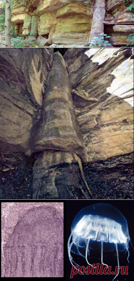 Развенчивание эволюции. Неопровержимая совокупность доказательств библейского Потопа