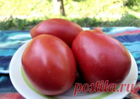 70 киллограм с 1 куста томатов! Рекордный урожай! | Дачная жизнь | Яндекс Дзен
