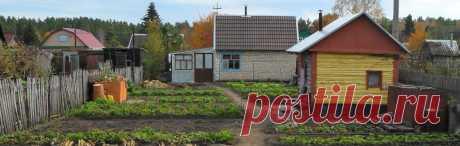 Сорта овощей для Сибири