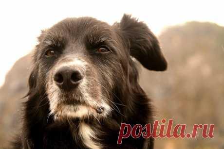 Старая собака   У старой собаки больные лапы, Седая морда и взгляд юродив. Спросонья зевает и лает слабо, Показать полностью…