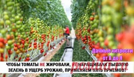 для томатов