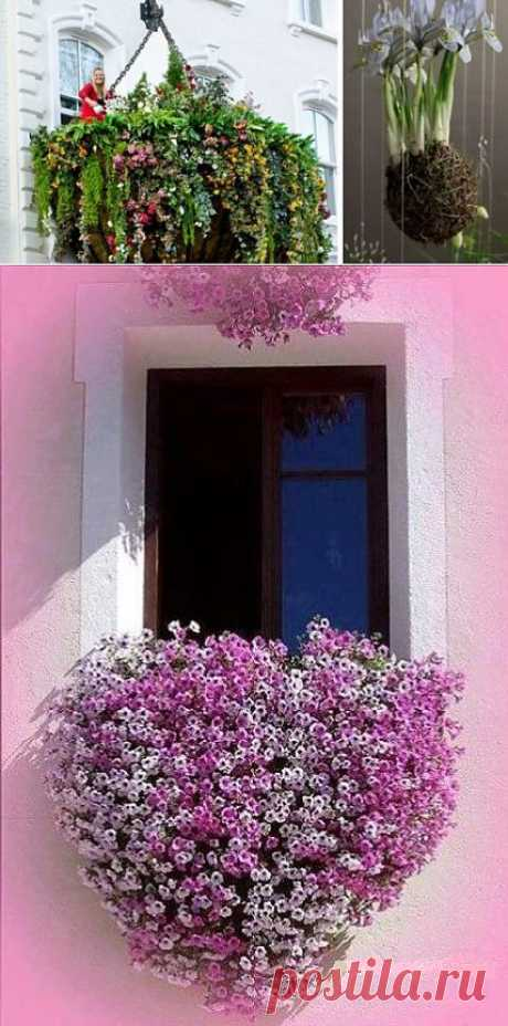 Висячие сады в доме - мечта, которая может стать реальностью | Наш уютный дом