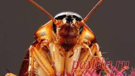 Как не допустить дома появления насекомых