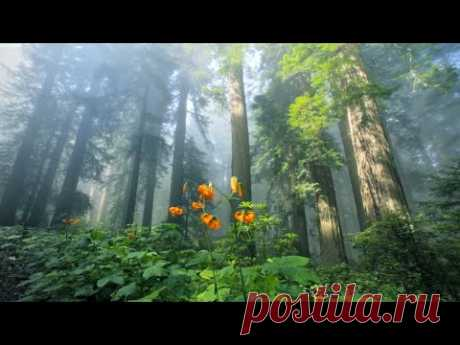 Красивая расслабляющая музыка - мирная музыка для фортепиано и гитара