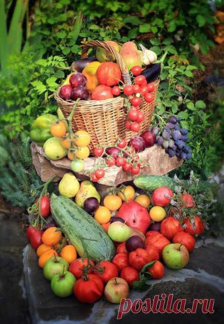 Борная кислота в саду и огороде, применение