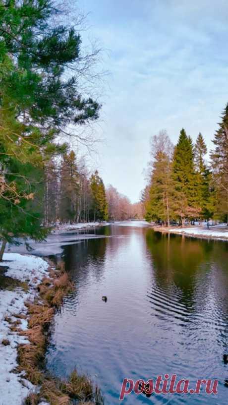 Гатчинский Дворцовый парк. Вешние воды.
