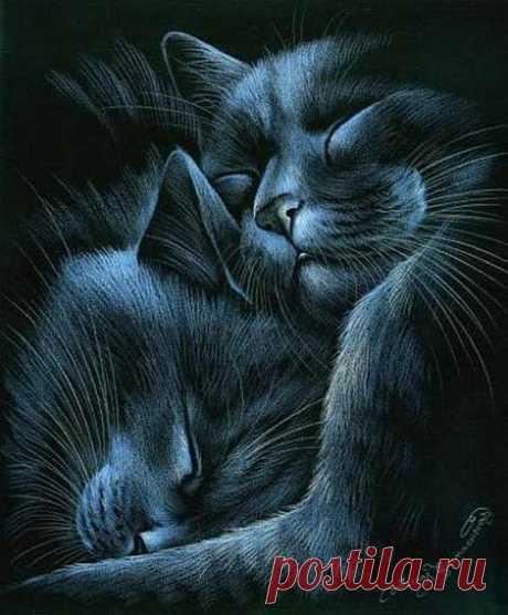 Кошачье нежность