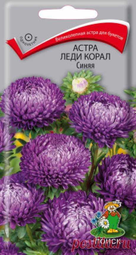 """Семена """"Астра. Леди Корал синяя"""", 0,1 грамм Великолепная астра для нарядного осеннего букета! Растение пирамидальной формы с множеством цветоносов, высотой около 60-70 см. Соцветия густомахровые, синие, розовидные, диаметром 10-12 см. Цветет в августе-сентябре. Используют очень широко: для посадки в сборные цветники группами, на..."""