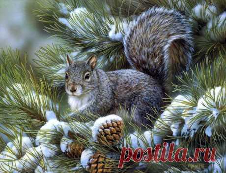 Мир животных...времена года   Rosemary Millette (часть 1.)