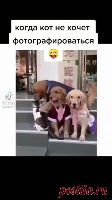 До чего собаки умные животные