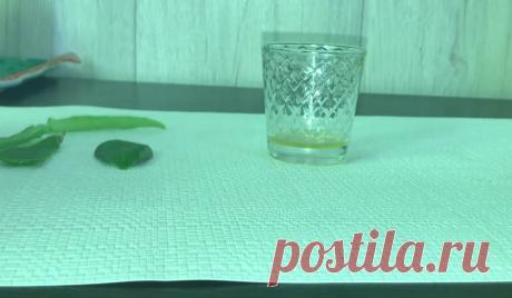 Листик алоэ и листик денежного дерева помогут избавиться от самых глубоких морщин на лице | Блог Елены Костюшко | Яндекс Дзен