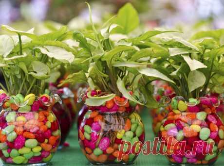 Питательные средства для комнатных растений — Полезные советы