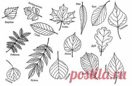 Осенние листья из бумаги: трафареты и шаблоны для распечатки и вырезания