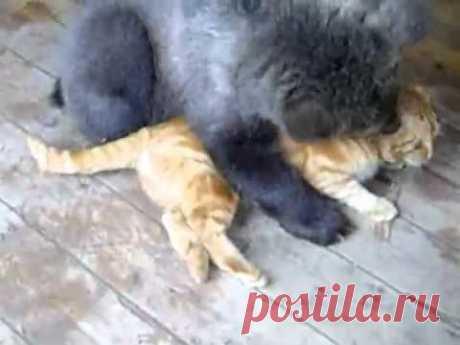 медведь и кот воспитатель