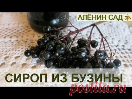 Делаем сироп из БУЗИНЫ черной!!!