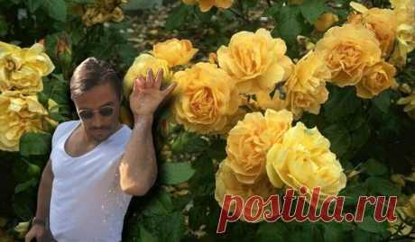 Чем подкормить розы осенью | Pentad  От правильно подобранных осенних подкормок напрямую зависит пышное цветение роз в летний период и их беспроблемная зимовка.  Если лето было чрезмерно дождливым, то удобрять лучше дважды: первый раз в начальных числах сентября, второй — с наступлением октября.