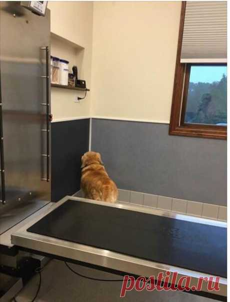 """These animals are not familiar among themselves, but on reception at the veterinarian apply identical tactics: \""""if I do not see you, then and you do not see me\"""" 