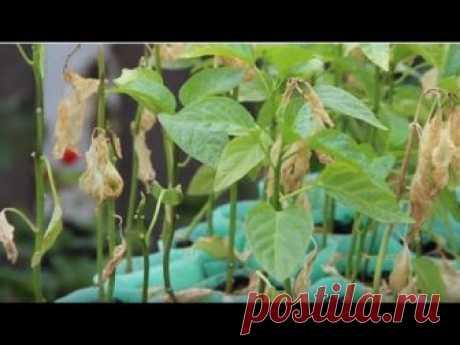 10 САМЫХ УЖАСНЫХ ОШИБОК выращивании РАССАДЫ.