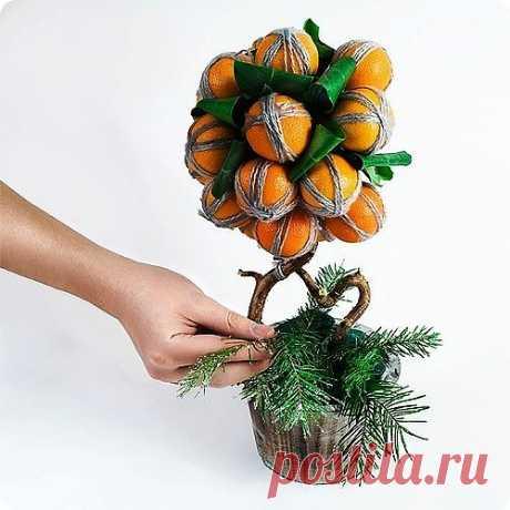 Мандариновое дерево своими руками | RNDnet