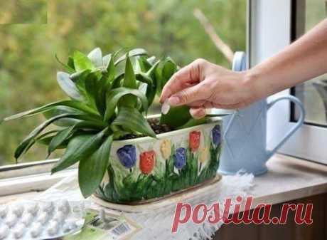 Дрожжи – отличное удобрение для растений