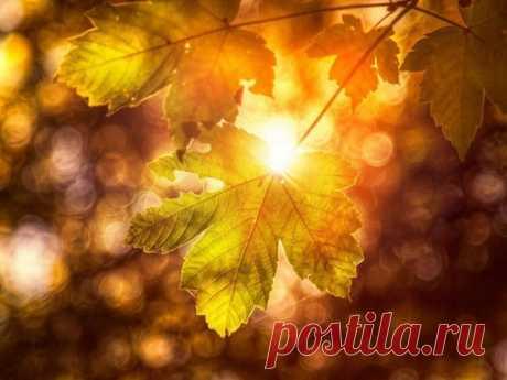 Между листьями свет, между ветками свет… Ничего, кроме света, на свете и нет, Ничего, кроме белого, белого дня, Что начало берёт с заревого огня, И уходит, кончаясь закатным огнём… Надо жить на земле лишь сегодняшним днём, Что огромен и нов, светоносен и чист, Где на ветке горит несгораемый лист  Лариса Миллер