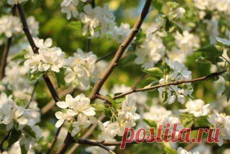 Календарь обработки сада от болезней и вредителей | Уход за садом (Огород.ru)