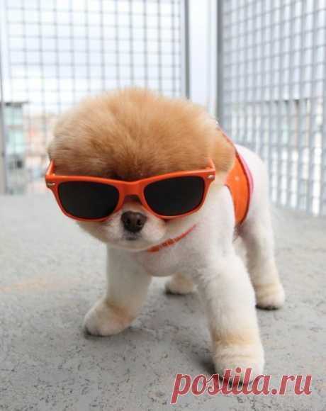 "Bu. A dog who to all is pleasant (50 photos)\"" to Triniksi"