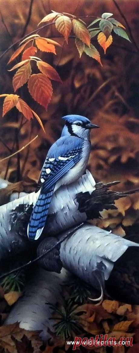 Jerry Gadamus Black Berry Blue   |   Pinterest • Всемирный каталог идей