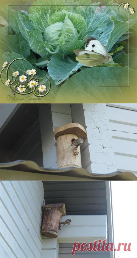 Почему пропали бабочки капустницы | Куклы Марины Еремеевой | Яндекс Дзен