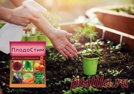 Как увеличить урожай томатов в открытом грунте вдвое | Томаты (Огород.ru)
