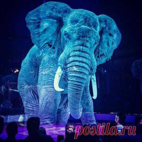 В немецком цирке животных заменили голограммами (7 фото + видео) . Тут забавно !!!