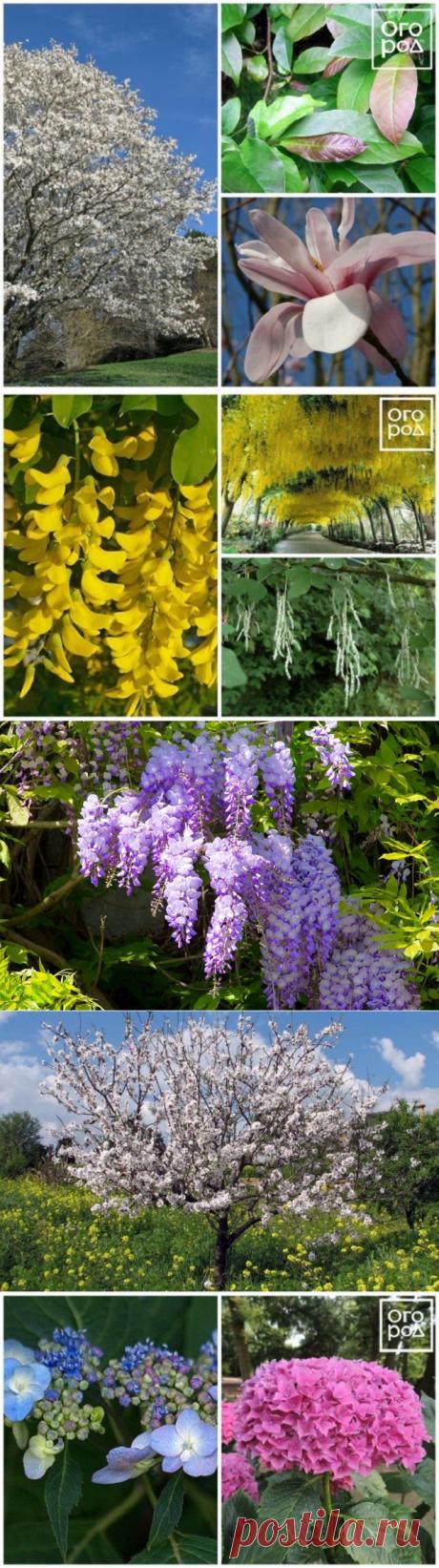 14 красивых южных растений: для Подмосковья не подходят, но попробовать стоит | Прочие многолетники (Огород.ru)