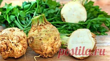 Seed a celery – you will not regret! - Mirtesen