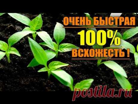 САМЫЙ НАДЕЖНЫЙ ПОСЕВ ПЕРЦА С БЫСТРОЙ 100% ВСХОЖЕСТЬЮ !