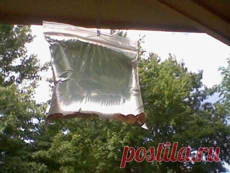 Этот простой прием с пластиковым пакетом отгонит всех мух от вашего дома