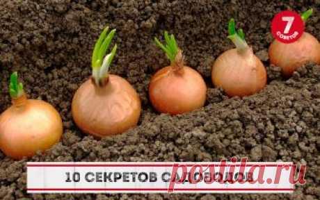 10 СЕКРЕТОВ САДОВОДОВ