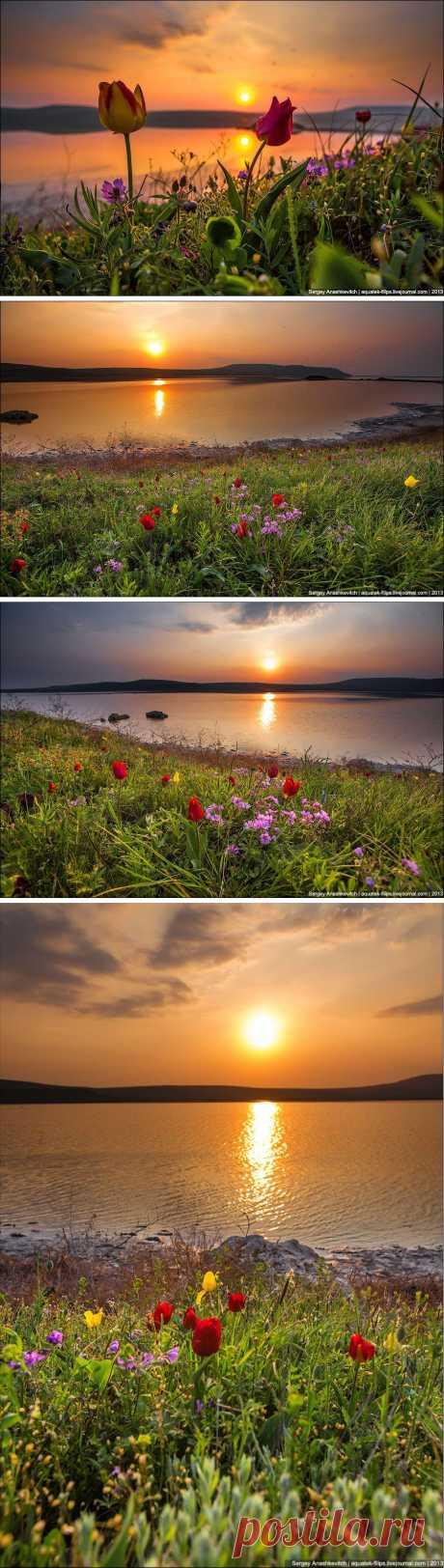 Ежегодно в конце апреля на некоторых степных участках восточного Крыма можно наблюдать невероятное по красоте зрелище.  Занесенные в Красную Книгу тюльпаны Шренка и Скифские тюльпаны безумным красно-желтым ковром покрывают степные просторы недалеко от Кояшского озера и заповедника Опук.