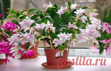 Вот что нужно положить на дно горшка, чтобы растения росли как на дрожжах Не каждое комнатное растение может хорошо расти в квартирных условиях. Атмосфера жилого помещения далеко не всегда так хороша для цветов, как нам бы этого хотелось. Благо, существует один действенный способ заставить цветы расти быстрее и быть более пышными...